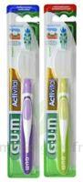 Gum Activital, Médium à BOURG-SAINT-MAURICE