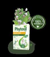 Phytoxil Toux Sans Sucre Sirop Adulte Enfant +6 Ans 12 Sachets/10ml à BOURG-SAINT-MAURICE